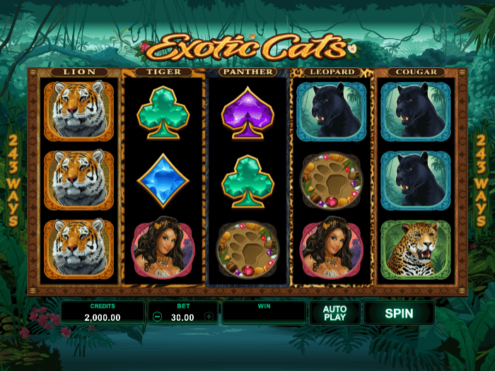 exotic cats iframe